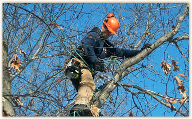 St. Croix Tree Removal